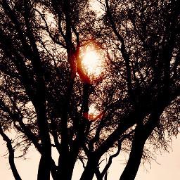 lateafternoon nature beautifultree nakedtree againstthesunsetlight freetoedit