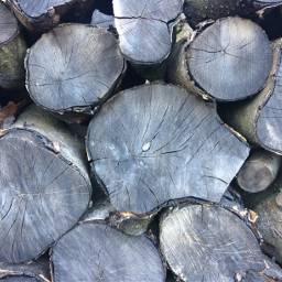 logs background logbackground wood woods freetoedit