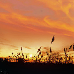 freetoedit pcthegoldenhour silhouette myoriginalphoto