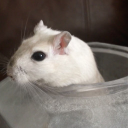 freetoedit gerbil dust cute