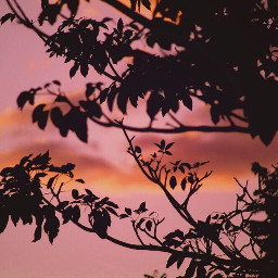 endoftheday sunsettime nature treebranches silhouette freetoedit