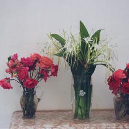 pcvase flowerarrangements vases flowers displayed freetoedit