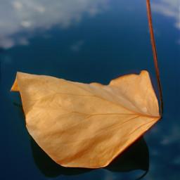 leaf nature fallenleaf refections simplebeauty freetoedit