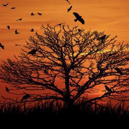 treeoflife crows raven creepy sunset