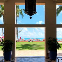 hawaii ocean hotel royalhawaiian palmtree freetoedit