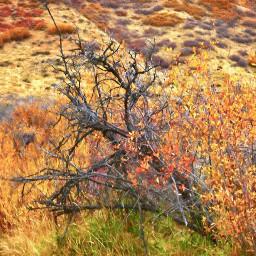 angeleyesimages landscapephotography landscape nature naturephotography scrubbrush freetoedit