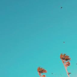 myphotography sky freetoedit pcbird pcsummertimeflashback pcpalmtrees pctheblueabove theblueabove
