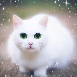 cat fisheyeeffect freetoedit