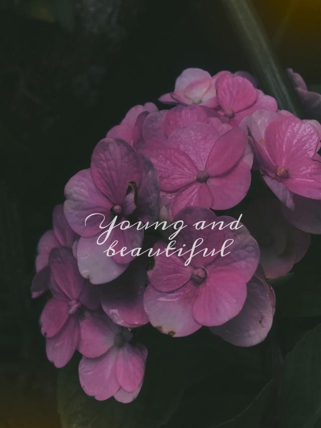 #freetoedit #flowerslovers #photographylovers #photographyart #photographyeveryday #photographynature #photographylife #photographyislifee #flowershot #flowersfollower