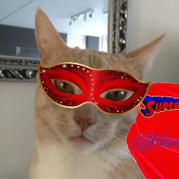 ecsuperpet superpet interesting wedstrijd cat