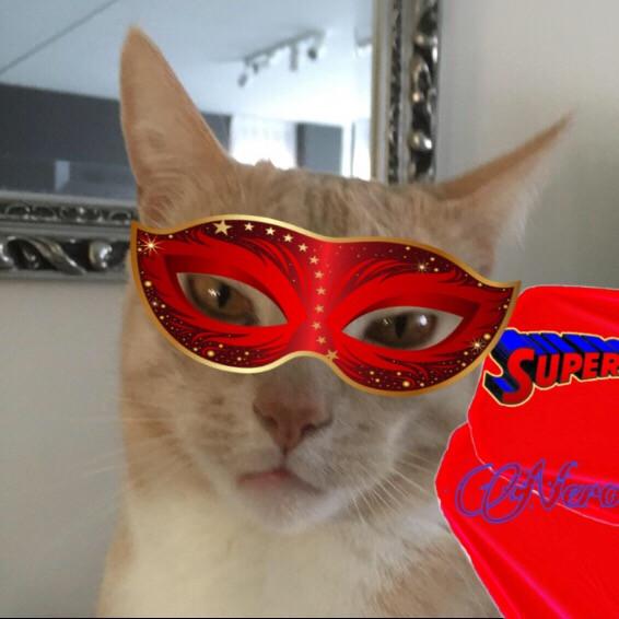 #interesting #wedstrijd #cat