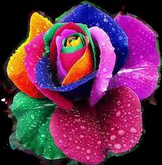 #flores @joseaneg87