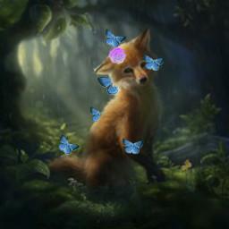 freetoedit fox forestlife