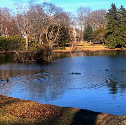 freetoedit nature lake ducks patterns