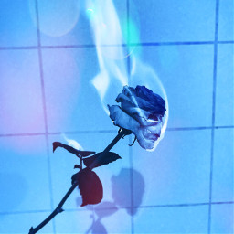 aesthetic blueaesthetic blue rose randomshit freetoedit