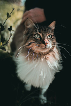 #catcuratedcat,#catcurateddog,#catcuratedhorse,#catcuratedbutterfly,#catcuratedbunny,#catcuratedanimals,#catcuratedcats,#catcurateddogs,#catcuratedhorses,#catcuratedrabbits