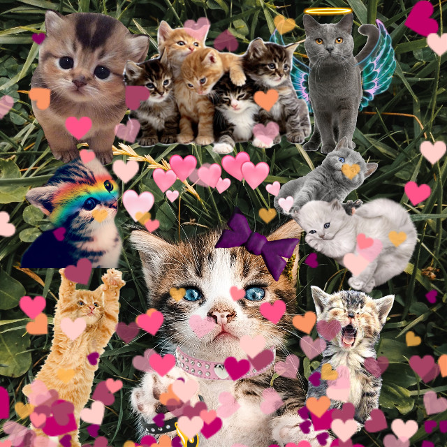 #freetoedit #kittens #kittys #cats #adorable #animal