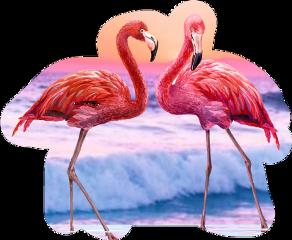 like flamingo beach nature freetoedit