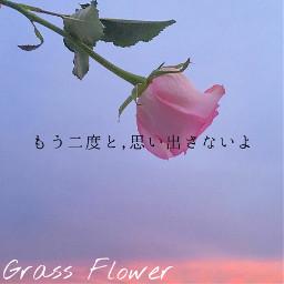 king grassflower 歌詞画