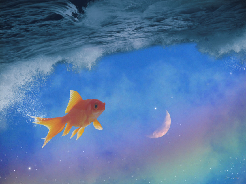 #freetoedit #sky #moon #fish #ocean
