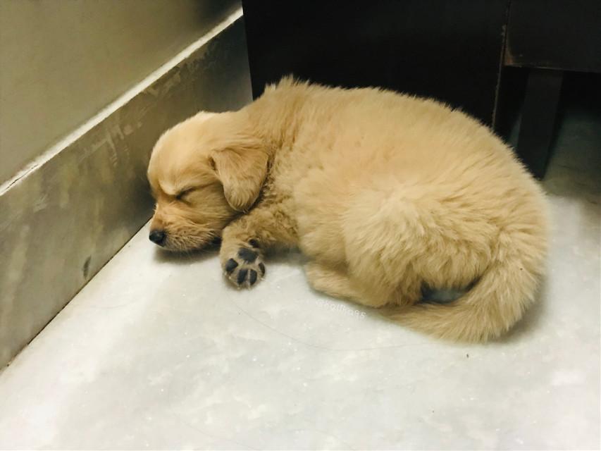 #pet #puppy #dogsofpicsart #petsofpicsart #pchappypetday