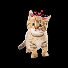 kittylove freetoedit