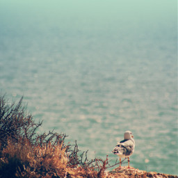 seagul cliff rockysurface wildplants nature freetoedit