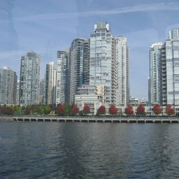 canada vancouver trees colurful