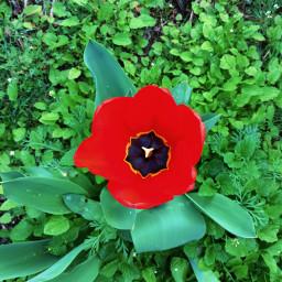 freetoedit flower power flowerpower nature