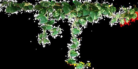 vine vines green nature jungle freetoedit