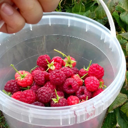 freetoedit raspberries fruit red farm