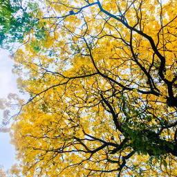 naturephotography trees booming yellowflower beauty