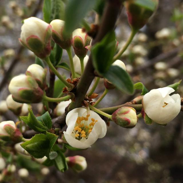 #photography #nature #spring #tree #fowers #amazing #freetoedit