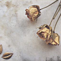 rose marble leaves yellow old