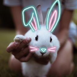 unsplash freetoedit bunny easter bunnyears