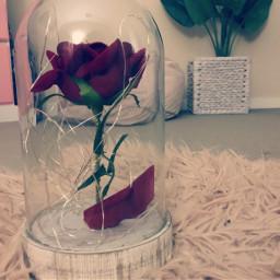 pcstilllifephotography stilllifephotography freetoedit rose object