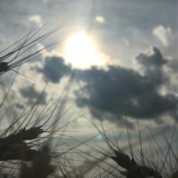 pcinthesky inthesky wheatfield sky sunrays