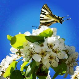freetoedit baterfly mariposa spring primavera