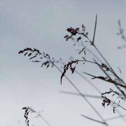 plant sky nature blue aesthetic freetoedit