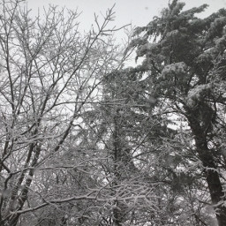 pcintonature intonature freetoedit snow cold