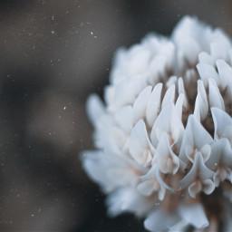 freetoedit edit clover