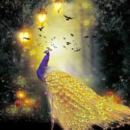 freetoedit flockstickerremix flockofbirds peacock goldenpeacock srcflyinghigh