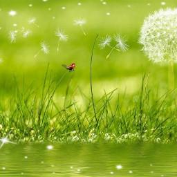 freetoedit dandelion green_grass little_river sunny_day