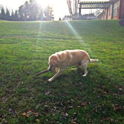 freetoedit puppy cute remixit sunny