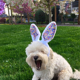 easter bunny dog love puppy day