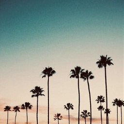 freetoedit aesthetic palmtrees cool kewl