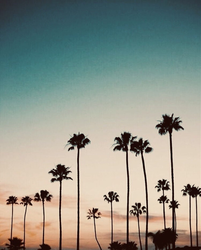 #freetoedit #aesthetic #palmtrees #cool #kewl #yassssssssssssssss #aestheticallypleasing #bluesky #exquisite #pinterest #peaceful #serene #serenebeauty #tranquil #tranquillity