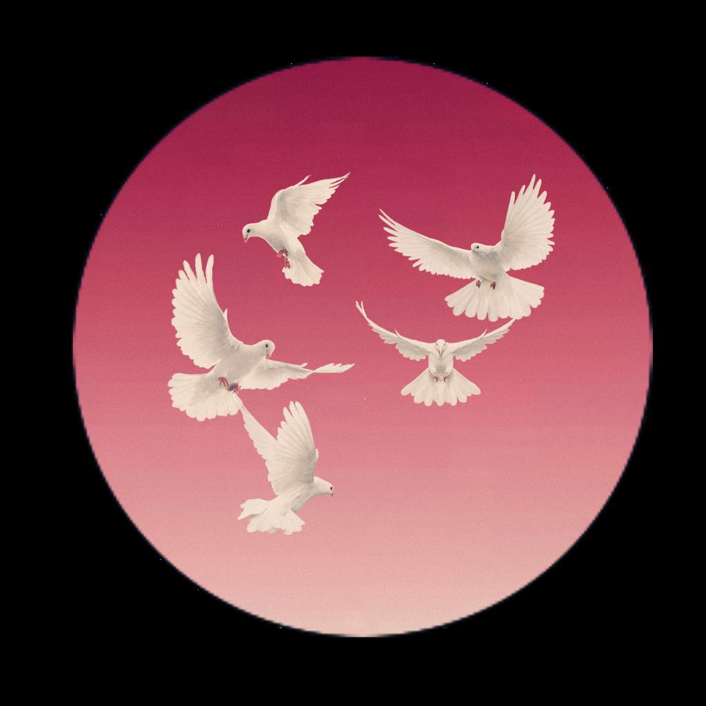 pigeon vhs vhsoverlay overlay vhsplay noisy noise circl