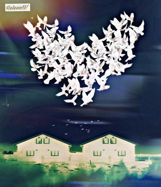 Good morning with love #fantasy #imagination #love #birds #lovebirds #madewirhpicsart #surrealism #nature #picsarttools #myedit #myart #mystyle #freetoedit