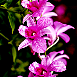 freetoedit orchid orchids flowers flower